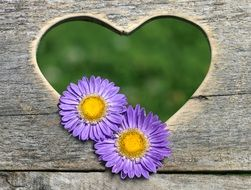 heart shaped hole in a wooden bench and two purple flowers