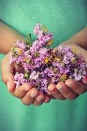 purple wildflowers in hands close-up