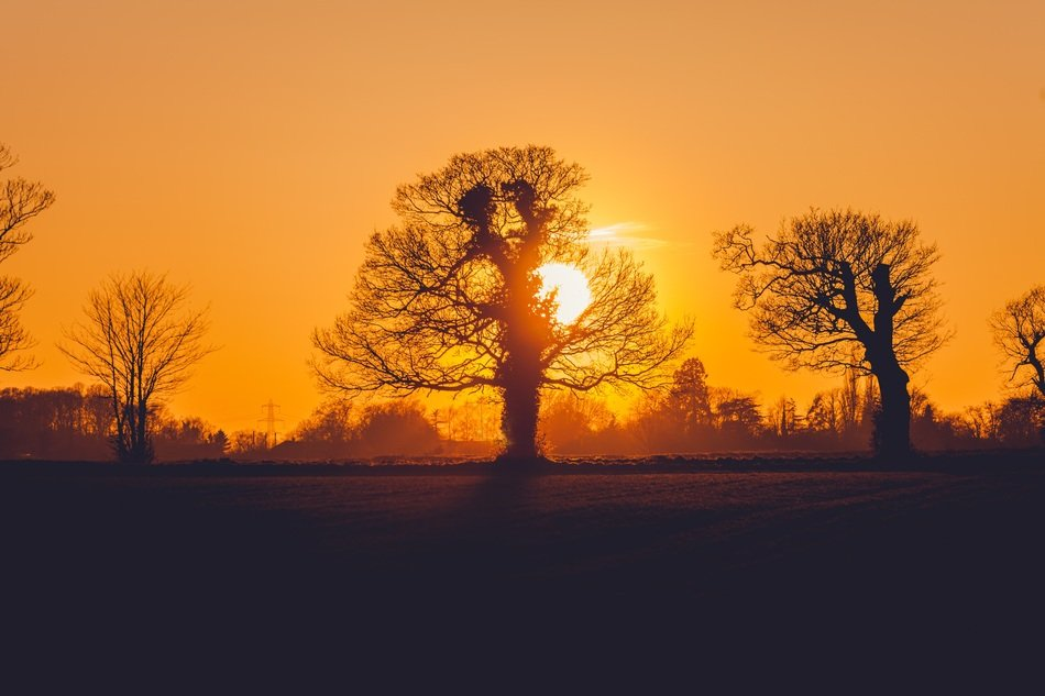 Orange Sun and trees as silhouettes