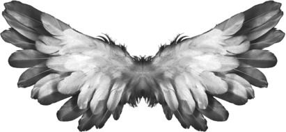 Angel Wings Feather drawing