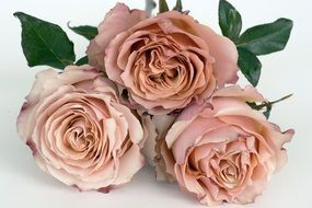 bouquet of pastel roses