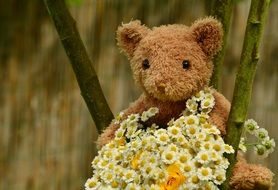 Teddy Bear with white daisies Bouquet