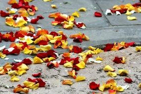 rose petals red and yellow