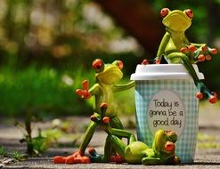 funny frogs and coffee cup