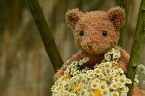 teddy bear with bouquet