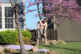 shirtless guy cares for the lawn summer