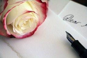 pink rose for love letter