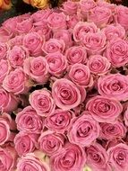 huge bouquet of pink roses close up