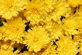 Lots of Yellow Flowers