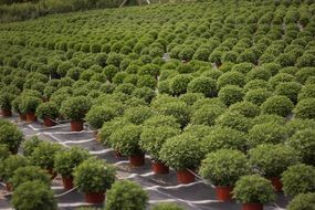lot of green potted plants outdoor