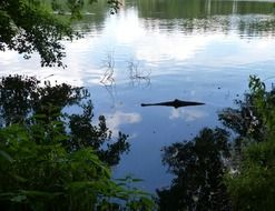 Lake Crocodile Optical Deception