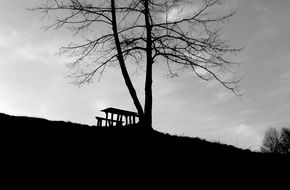black and white photo of a wooden bench on top of a hill