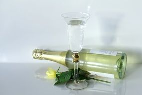 water in glass, bottle of sparkling wine and yellow rose