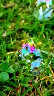 soap bubble on the grass