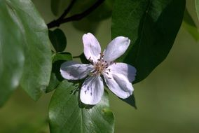 white flower on a thin branch among green leaves