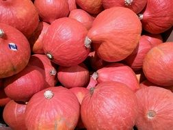 red decorative squashes