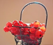 red currants berries in the basket