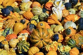 colorful gourd in autumn