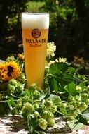 paulaner Wheat Beer