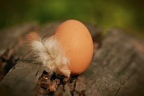 Brown hen's egg on the wood