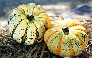 two striped pumpkins on straw
