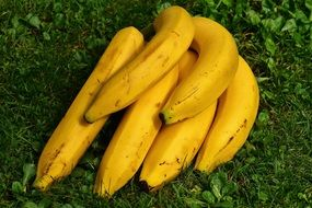 healthy bananas in the grass