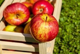 ripe apples in a wooden crate