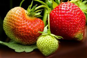 green strawberry fruits