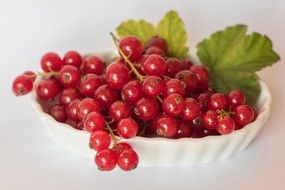 red currants in the plate