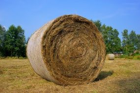 straw bale on the field