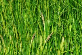 green bright tall grass