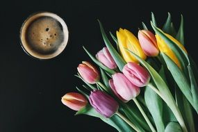 Beer and Tulips