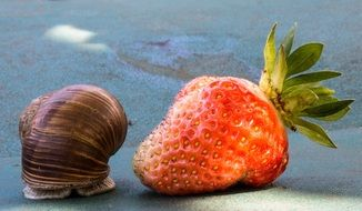 strawberry and garden snail