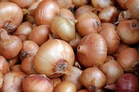 harvest of onions in a box