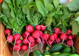 lot of fresh radish in a basket