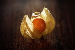little physalis on the table