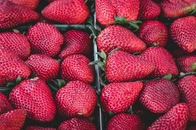 ripe beautiful strawberries in trays for sale