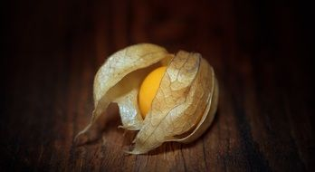 physalis is an emerald berry