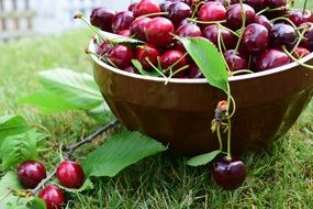 cherries bowl