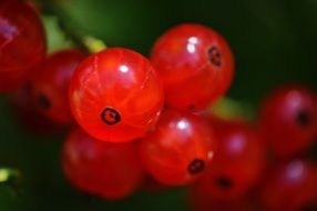 Currants Fruit Berries
