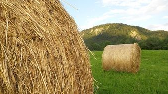 hay bales on the green agricultural field
