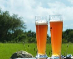 two glasses of wheat beer