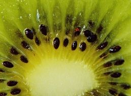 kiwi fruit seeds