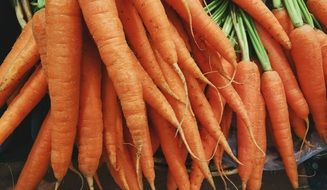 lot of washed carrots