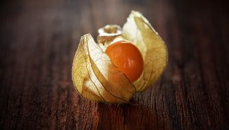Physalis berry natural product