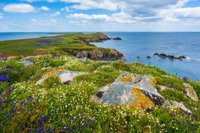 Coast with tall green grass and rocks