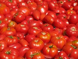 Red fresh tomatoes vegetables