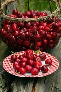 harvest of sweet cherry in summer