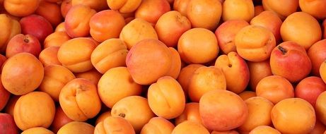 Fresh Apricots sweet Fruits