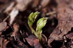 seedling in the forest
